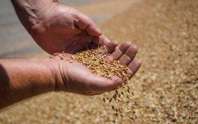 Рекордные поставки российского продовольствия за рубеж не должны радовать – эксперт «Точки зрения»