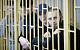 Суд присяжных оправдал «приморских партизан»