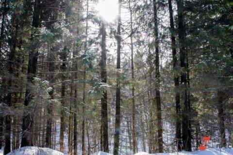 Дмитрий Новиков: «Иркутский лес» расставляет все по местам
