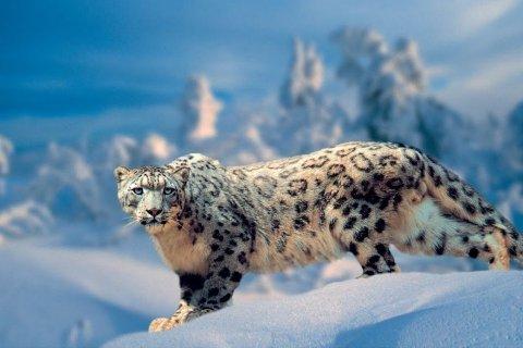В России разрешили VIP-охоту на животных, занесенных в Красную книгу, в «исключительных случаях»