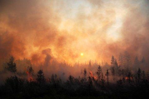 В ряде регионов Сибири введен режим чрезвычайной ситуации из-за лесных пожаров