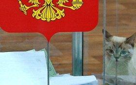 «Кот пришел проголосовать». В Санкт-Петербурге провластным наблюдателям на голосовании приказано 7 раз в день сообщать, что на участках «все спокойно»