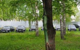 В лесу под Челябинском обнаружили 50 спрятанных новых чиновничьих иномарок