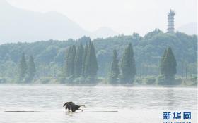 Экономический ущерб от летних наводнений в Китае составил 7,7 млрд долларов