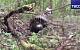 В Подмосковье упал Су-27. Пилот погиб