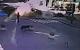 Момент взрыва автомобиля Шеремета попал на видео