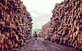 Юрий Афонин: Запрет вывоза необработанного леса – это то, чего давно добивались коммунисты
