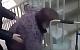 В больнице пациентку с травмой ноги вынудили ползти до рентген-кабинета (Видео).