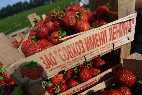 Геннадий Зюганов предложил не мешать продавать в Москве клубнику из совхоза имени Ленина