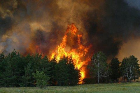 В КПРФ предложили ввести госмонополию на пользование лесными угодьями