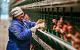 Россиян предупреждают о подорожании яиц и кур
