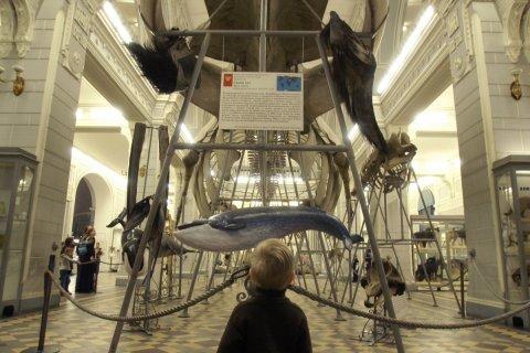 В России количество самоубийств выросло на 60%. Виноваты – синие киты