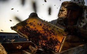 Ассоциация пчеловодов оценила ущерб от гибели пчел в триллион рублей