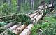 На Дальнем Востоке в Китай вывезли контрабандой лес на 800 млн рублей