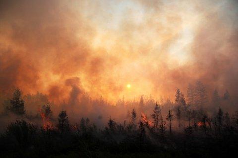 За последний год Россия потеряла 5,3 млн гектаров леса