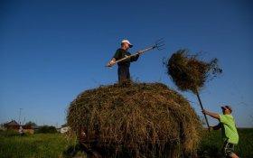 Россия в 16 раз нарастила экспорт сена