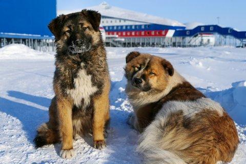 Минэкономразвития предлагает сократить программу развития Арктики вчетверо