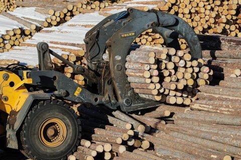 В России незаконно вырубают лес на миллиарды рублей. Преступникам помогают чиновники