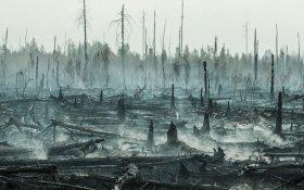 Минприроды обвинил власти Иркутской области и Якутии в занижении данных о лесных пожарах