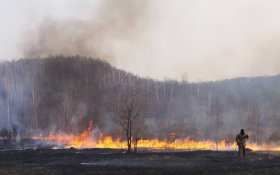 В КПРФ заявили: Лесные пожары в Сибири – экологическая катастрофа мирового уровня