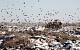 Счетная палата: Через несколько лет в 7 регионах мусор будет некуда выкидывать