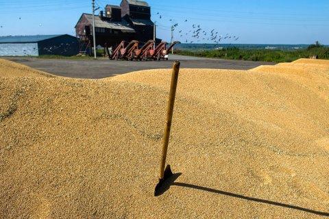 Турция ввела новые ограничения на импорт пшеницы из России