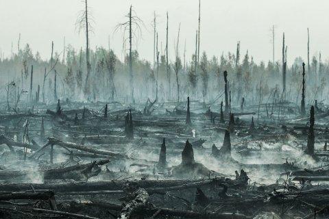 Депутат фракции КПРФ предложил ввести режим чрезвычайной ситуации федерального уровня из-за пожаров в Сибири