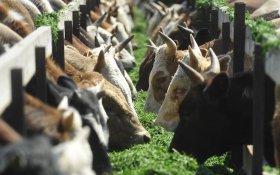 Минсельхоз предупредил о росте цен на мясо
